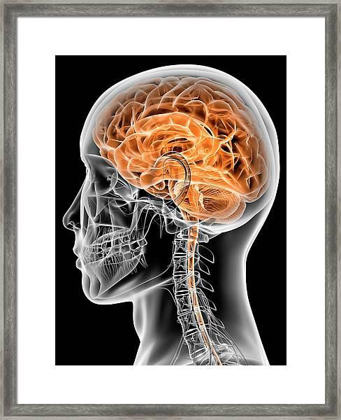 Internal Brain Anatomy Framed Print