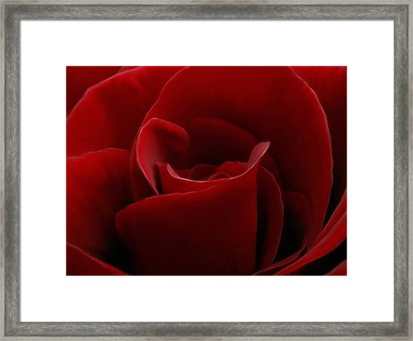 Intimate With A Red Rose Framed Print
