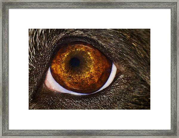 Into The Eye Of The Pit Framed Print