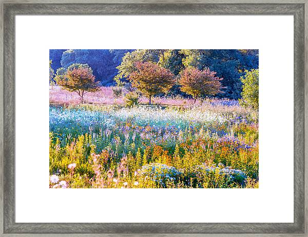 Iowa Summer Framed Print