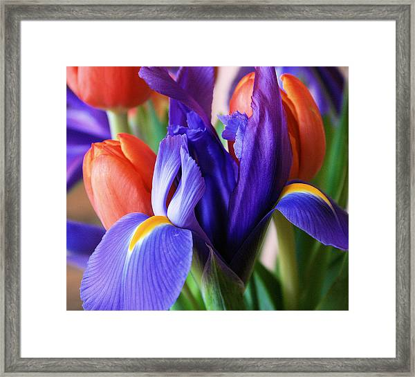 Iris And Tulips Framed Print