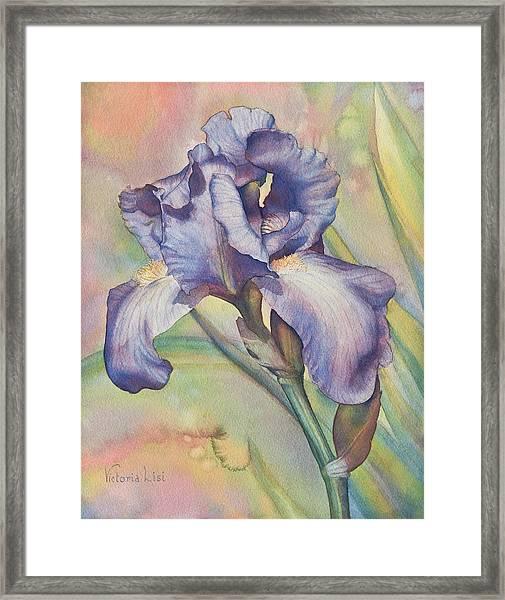 Iris Dreaming Framed Print