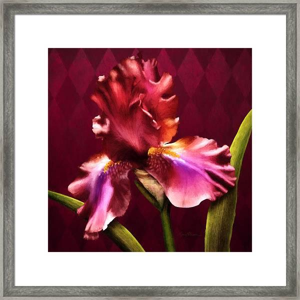 Iris I Framed Print