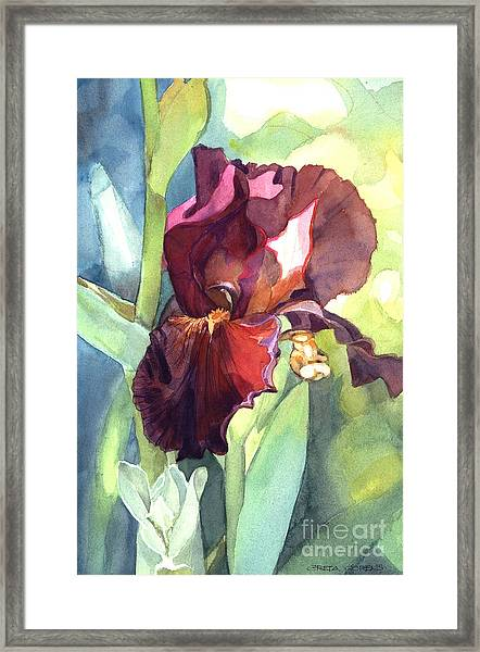 Watercolor Of A Tall Bearded Iris Called Sultan's Palace In Red And Burgundy Framed Print