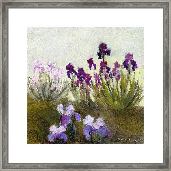 Iris In The Yard Framed Print