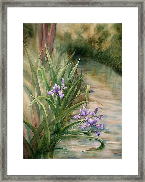 Iris Over The Inlet Framed Print