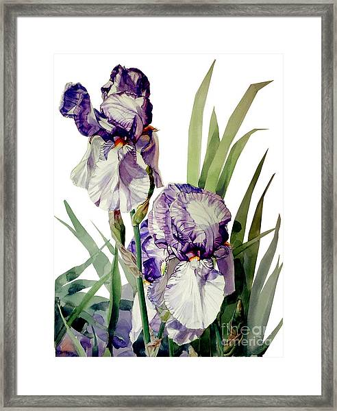 Watercolor Of A Tall Bearded Iris In Violet And White I Call Iris Selena Marie Framed Print