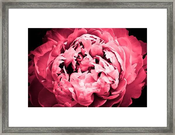 Irresistible Framed Print