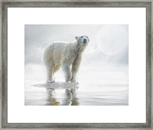 Is Anyone Out There? Framed Print