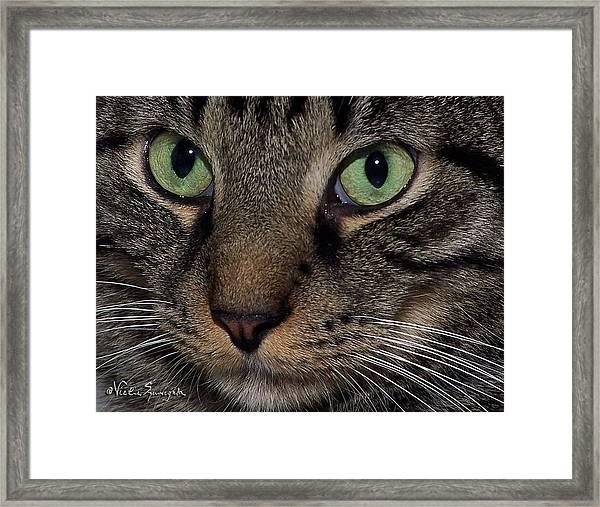 Isaac's Eyes Framed Print