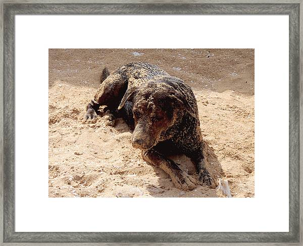 Island Dog Framed Print