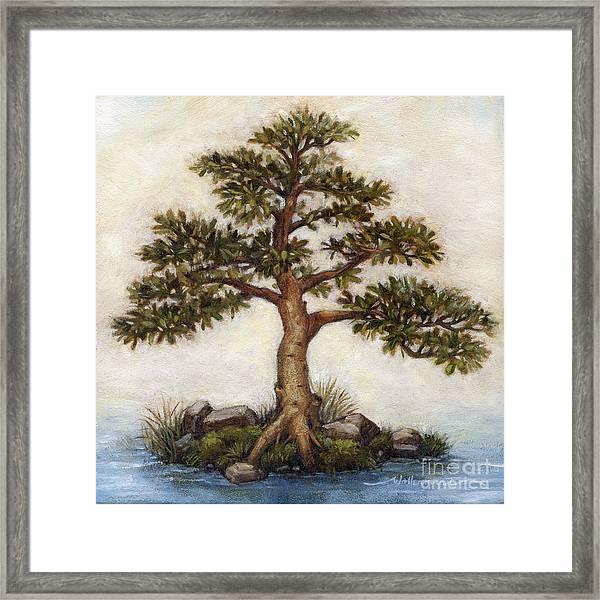 Island Tree Framed Print