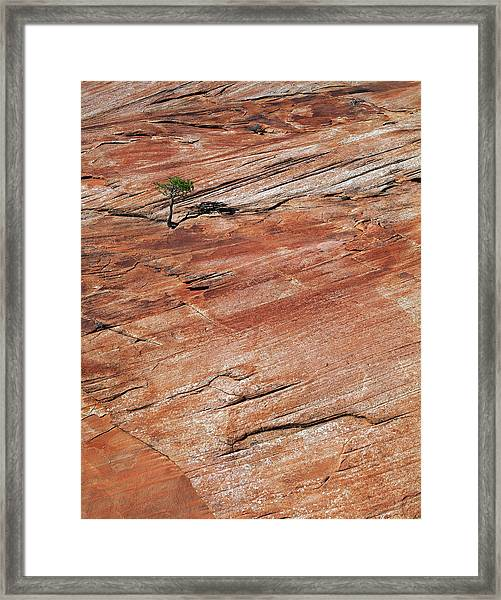 Isolated View Framed Print
