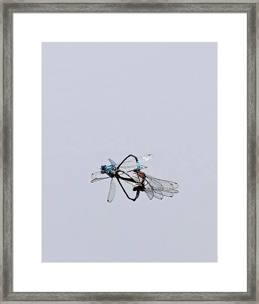 It Must Be Love  Framed Print