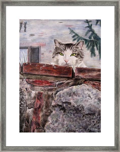 Italian Cat Framed Print by Karen Peterson