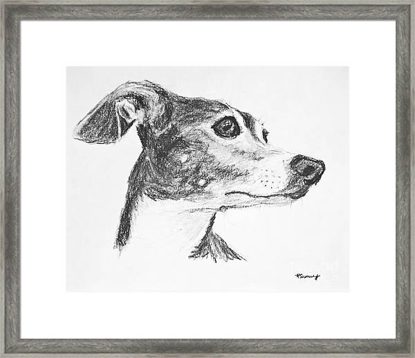 Italian Greyhound Sketch In Profile Framed Print