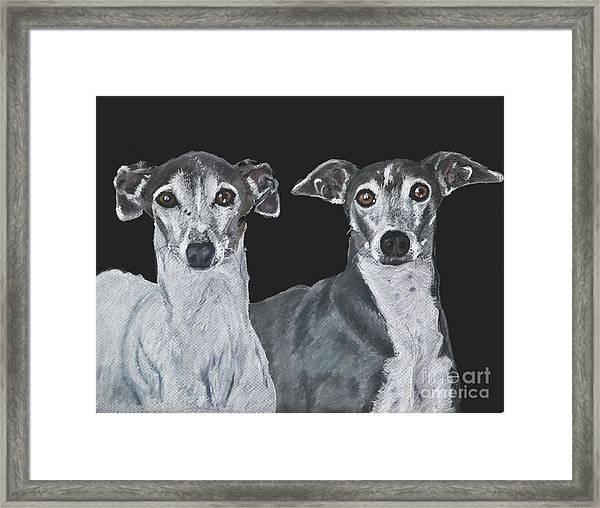 Italian Greyhounds Portrait Over Black Framed Print