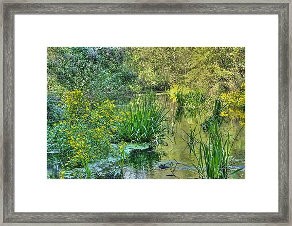 Itchetucknee Springs 01 Framed Print