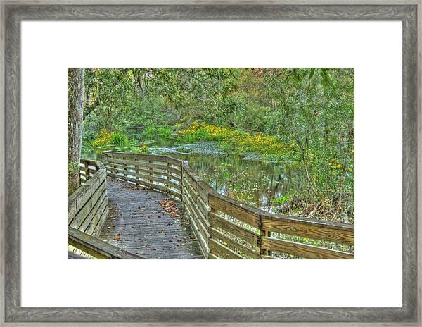 Itchetucknee Springs 05 Framed Print