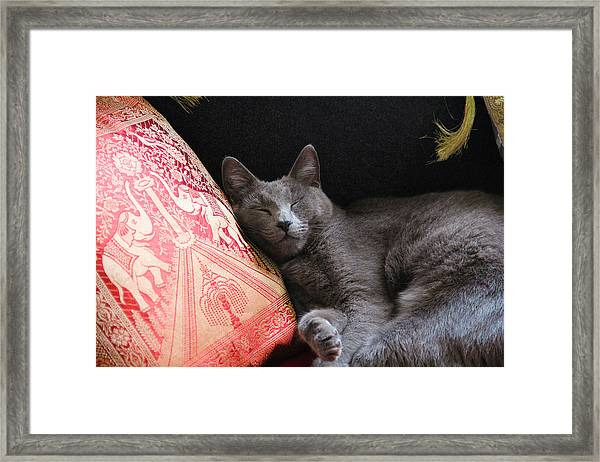 its a cats Life Framed Print by Debbie Cundy