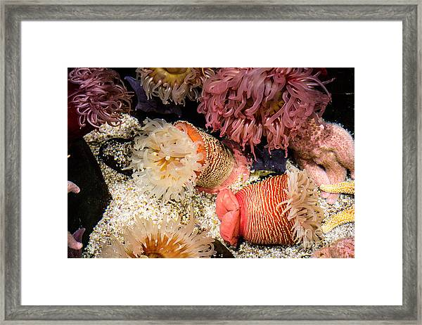 It's Alive... Framed Print