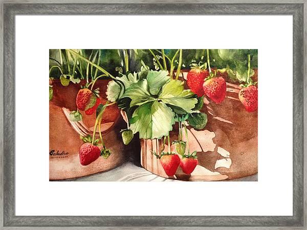 It's Berry Season Framed Print