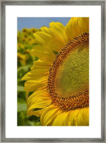 Framed Print featuring the photograph Itsy Bitsy by Skip Hunt