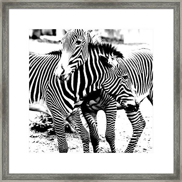 I've Got Stripes Framed Print