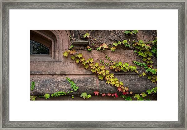 Ivy League Framed Print