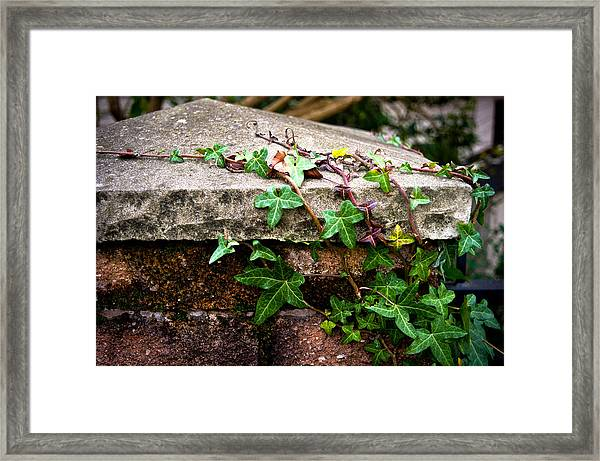 Ivy On Stone Framed Print