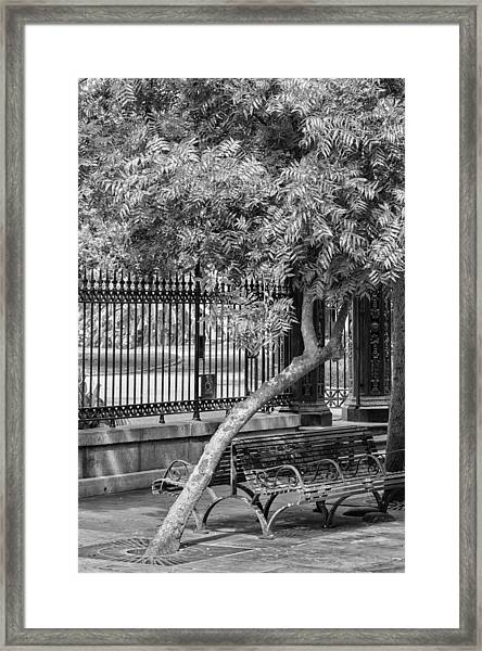 Jackson Square Bench And Tree Framed Print