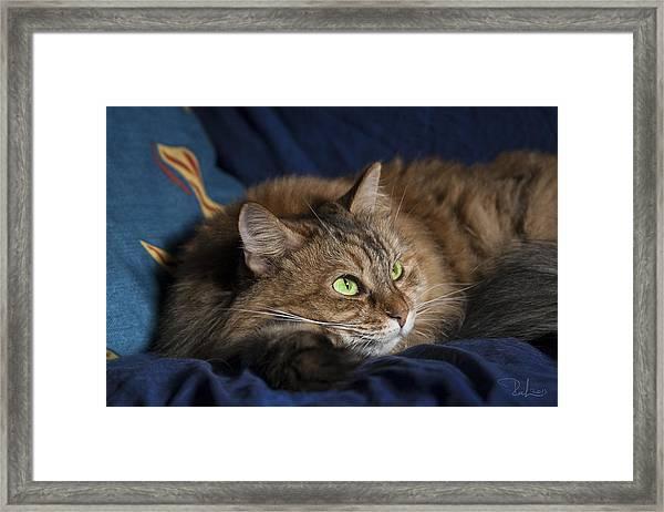 Jade Eyes In The Blue Framed Print