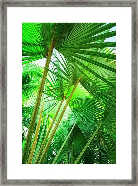 Jamaica, Palm Leaves Framed Print