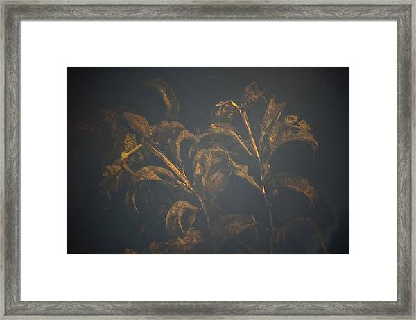 January's Antiquities Framed Print by Tom Trimbath