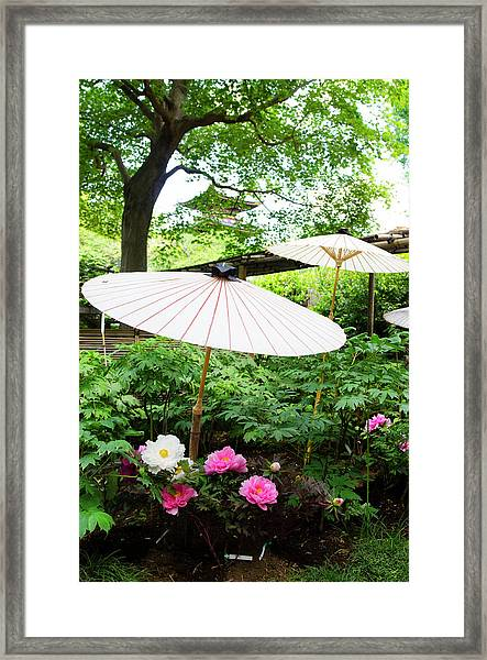 Japanese Garden With Pione Framed Print by Olgaza