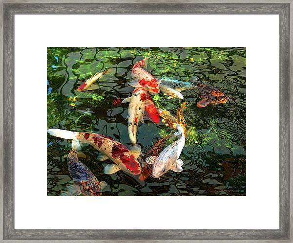 Japanese Koi Fish Pond Framed Print