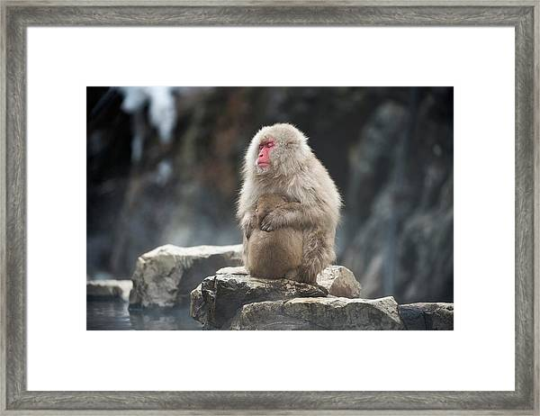 Japanese Macaque With Young Framed Print by Dr P. Marazzi