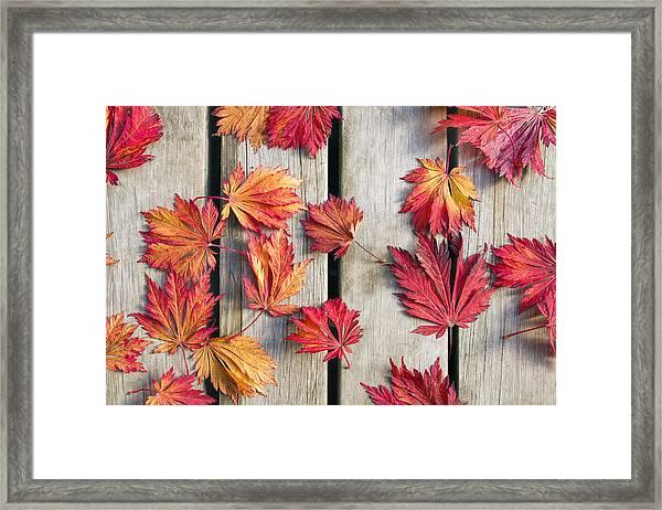 Japanese Maple Tree Leaves On Wood Deck Framed Print
