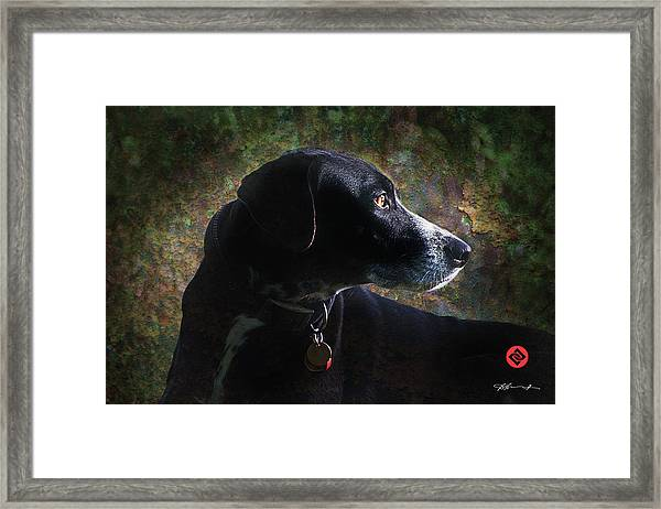 Jazz's Portrait Framed Print