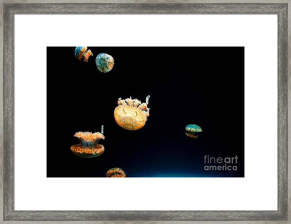 Jellies Framed Print