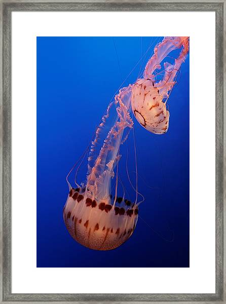 Jelly And Fishy Framed Print