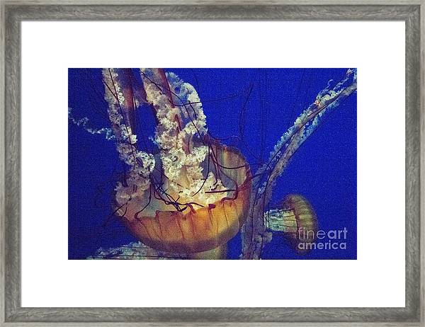 Jelly Jam Framed Print
