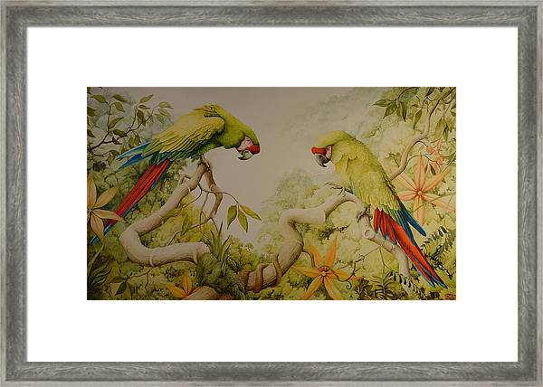 Jewels Of The Rain Forest  Military Macaws Framed Print