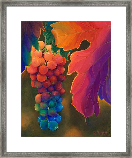 Jewels Of The Vine Framed Print