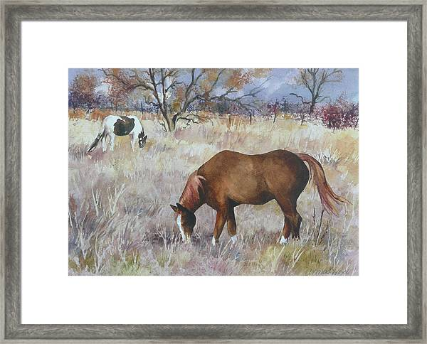 Jill's Horses On A November Day Framed Print