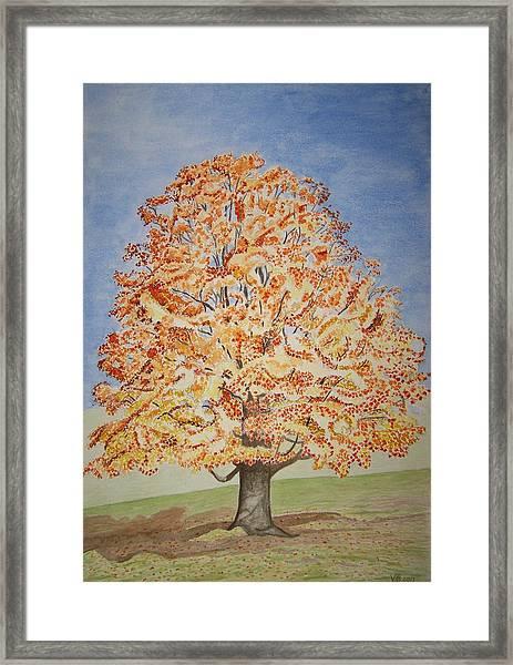Jolanda's Maple Tree Framed Print