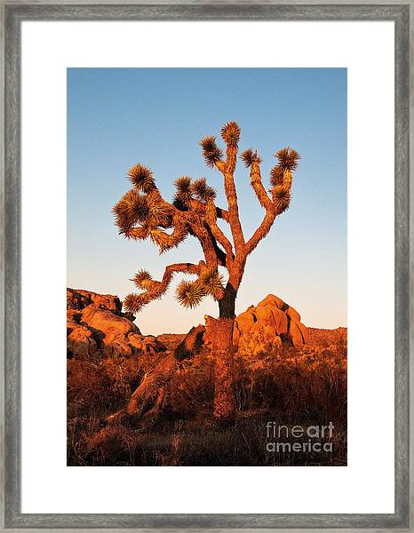 Framed Print featuring the photograph Joshua Tree At Sunset by Mae Wertz