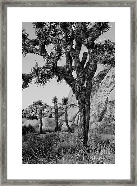 Joshua-tree Babies Framed Print by Mae Wertz