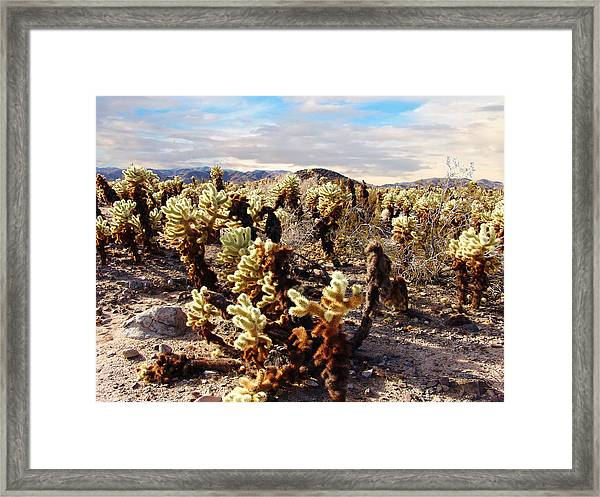 Joshua Tree National Park 3 Framed Print