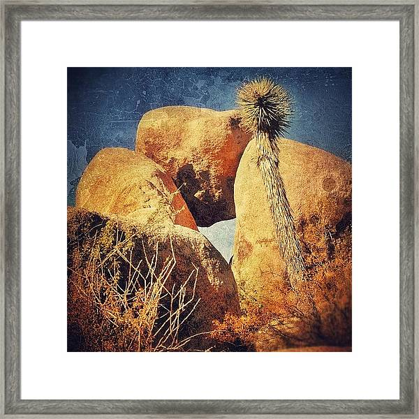 Joshua Tree Np Framed Print